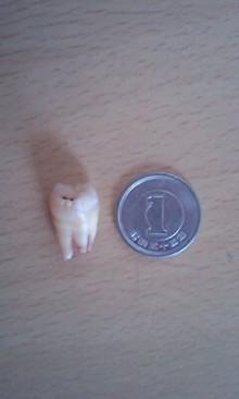 たかぎ歯科・矯正歯科 みんなの日記