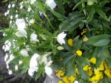 たかぎ歯科・矯正歯科 みんなの日記-2012-04-01 12.16.15.jpg2012-04-01 12.16.15.jpg